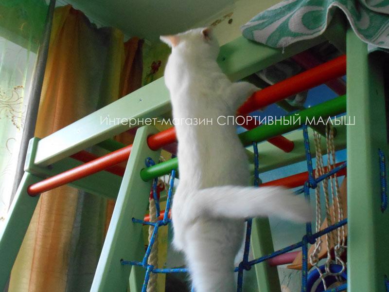 Котик покоряет детский спорткомплекс Теремок. Фото-отзыв покупательницы магазина dsk-detki.ru