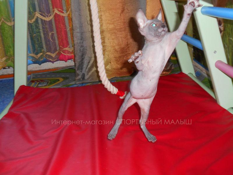 Спортивный котик резвится в детском комплексе Теремок