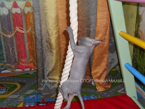Спортивный котик карабкается по канату, входящему в состав комплекса для раннего развития детей Теремок